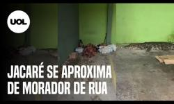 VÍDEO: Jacaré se aproxima de morador que dormia na rua e mobiliza PM