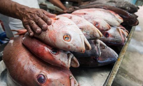 Pesquisa aponta diferença de quase R$ 60 no quilo do peixe
