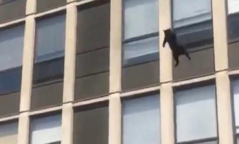Gato pula do quinto andar de prédio em chamas e sobrevive; veja vídeo