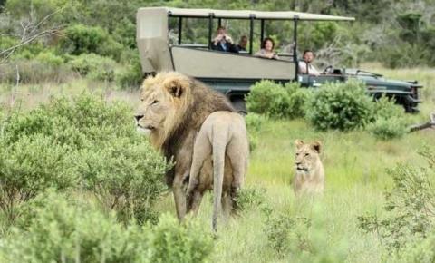 Caçadores são devorados por leões após entrar ilegalmente em reserva para caçar